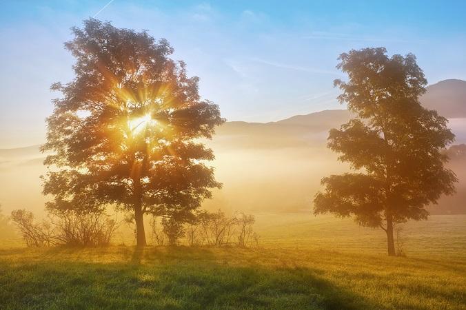 sunrise beams through the foggy tree