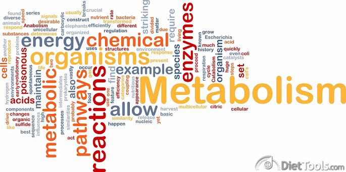 Metabolism metabolic background concept
